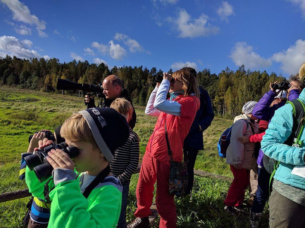 Putnu vērošana Ķemeru nacionālajā parkā, Eiropas putnu vērošanas dienas 2016. Foto: Baiba Roga